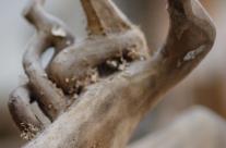 Details einer Skulpturalen Wurzel