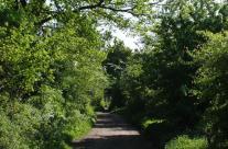 Der Weg zum Atelier durch das Raakmoor