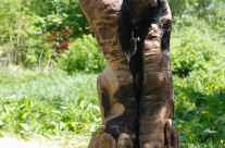 Skulptur aus Holz, das erste der Selbstbildnisse